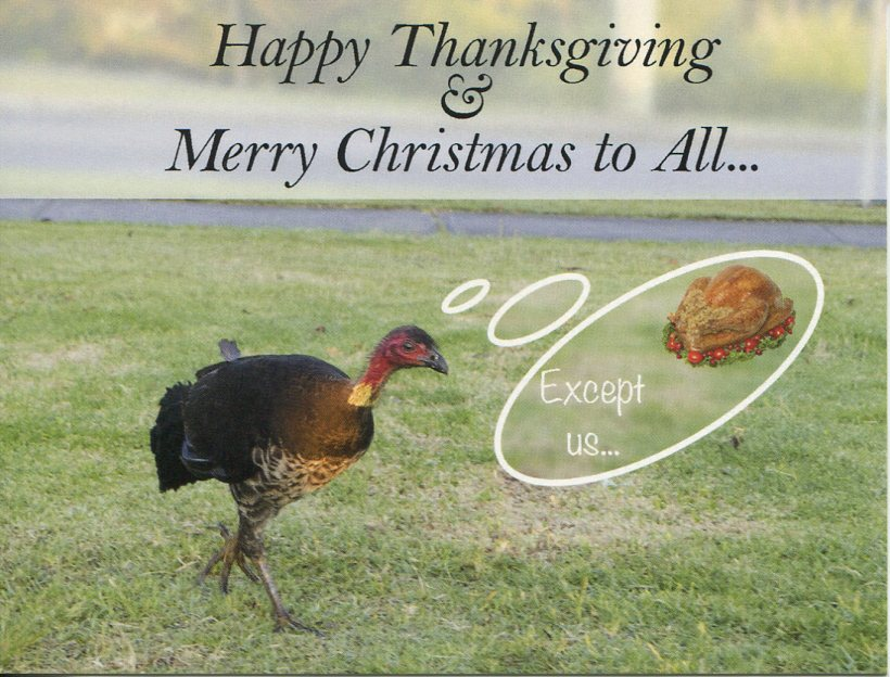 Happy Thanksgiving and Merry Christmas to All (Turkey)
