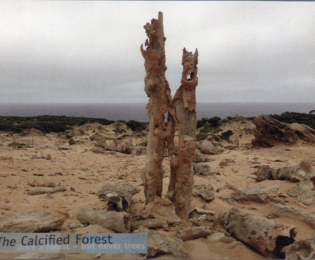 King Island - Calcified Forest