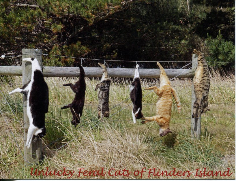 Flinders Island - Unlucky feral cats on Flinders Island