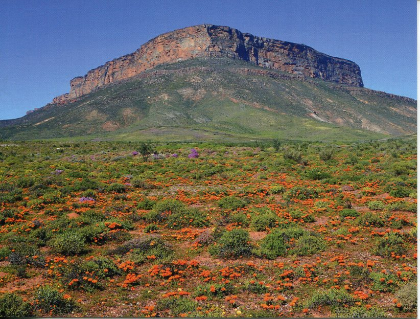 South Africa UNESCO - Cape Floral Region Protected Areas