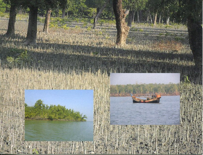Bangladesh UNESCO - The Sundarbans