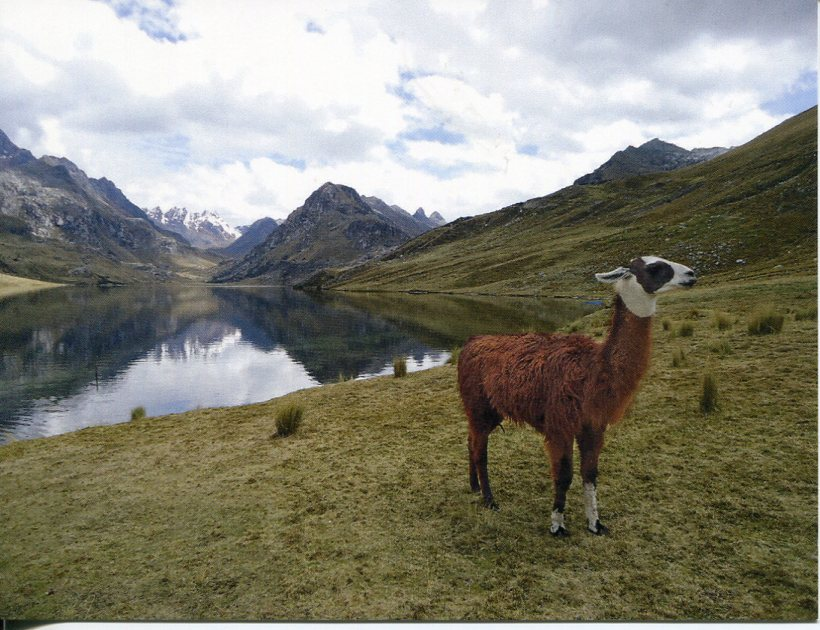 Peru UNESCO - Huascaran National Park (& Llama)