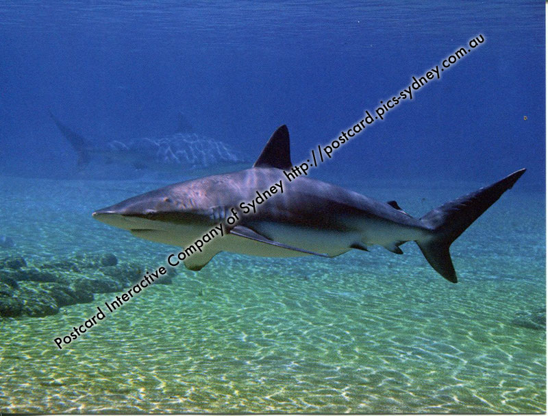 Costa Rica UNESCO - Cocos Island National Park (Shark)